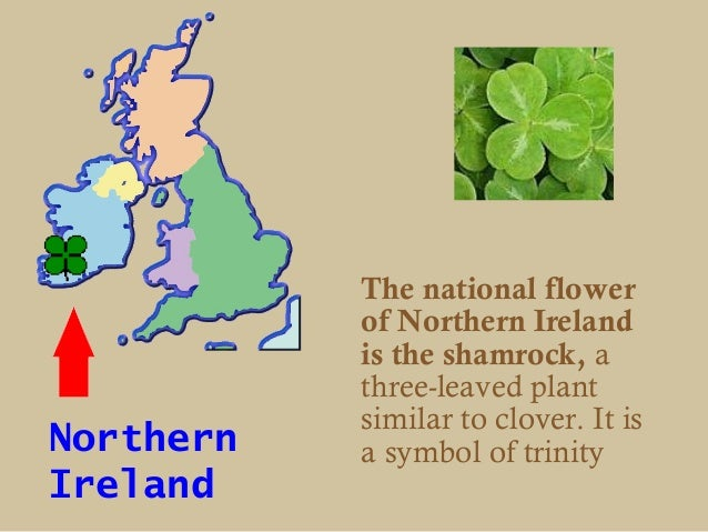 The national flower           of Northern Ireland           is the shamrock, a           three-leaved plant           simi...