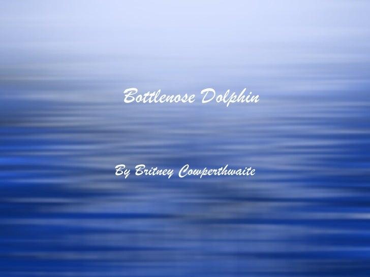 Bottlenose DolphinBy Britney Cowperthwaite