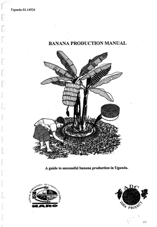 Banana production