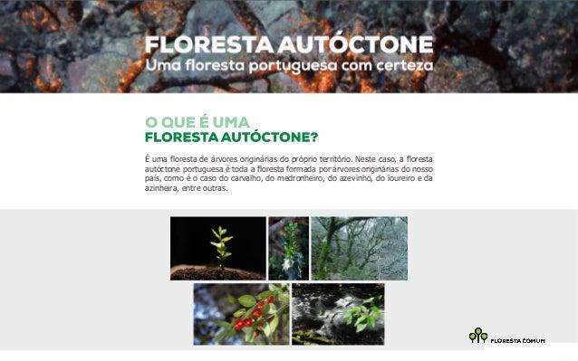 É uma floresta de árvores originárias do próprio território. Neste caso, a floresta  autóctone portuguesa é toda a florest...
