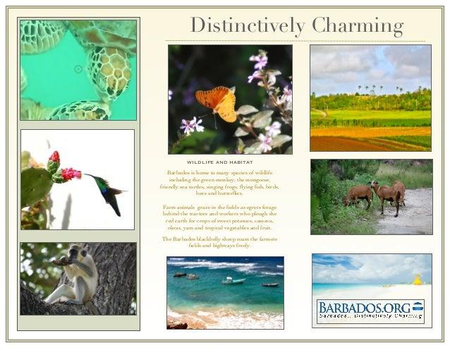Barbados Nature Tourism Brochure Slide 2
