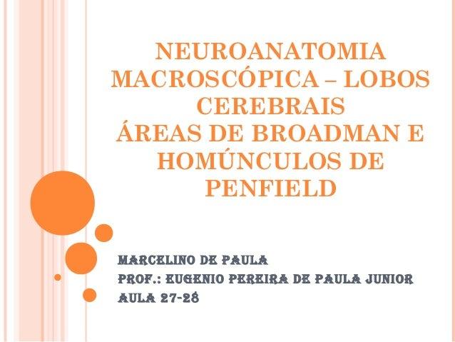 NEUROANATOMIA MACROSCÓPICA – LOBOS CEREBRAIS ÁREAS DE BROADMAN E HOMÚNCULOS DE PENFIELD Marcelino de Paula Prof.: eugenio ...
