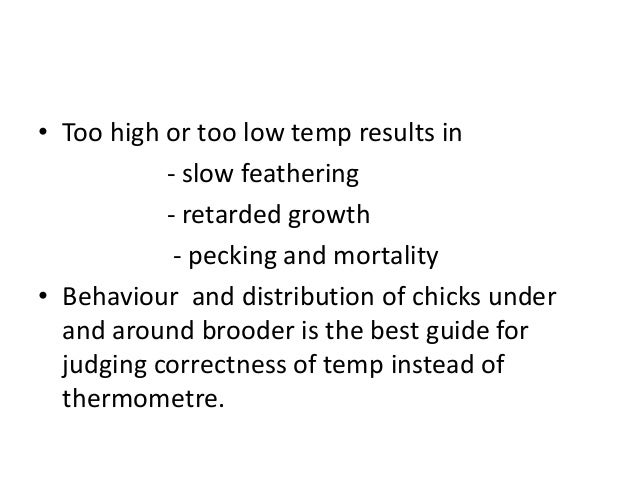• Too high or too low temp results in - slow feathering - retarded growth - pecking and mortality • Behaviour and distribu...