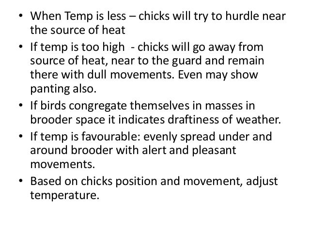 • When Temp is less – chicks will try to hurdle near the source of heat • If temp is too high - chicks will go away from s...