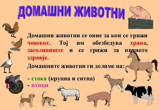Домашни животни се оние за кои се грижи човекот. Тој им обезбедува храна, засолиниште и се грижи за нивното здравје. Домаш...