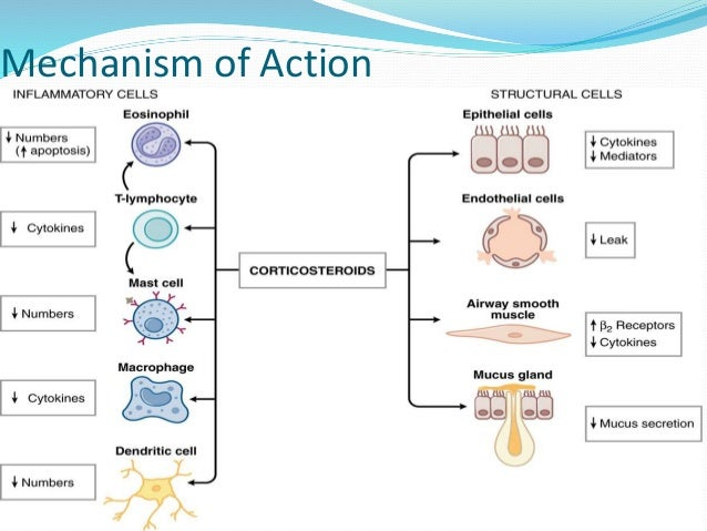 Pharmacology of Asthma