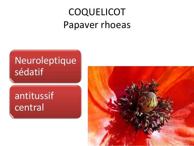 COQUELICOT Papaver rhoeas Neuroleptique sédatif antitussif central