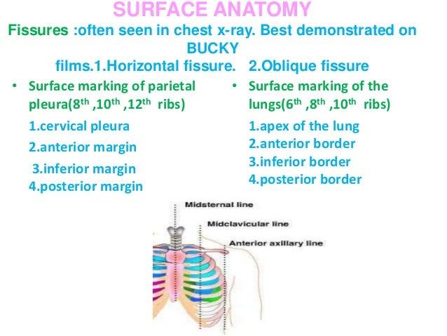 BRONCHOPULMONARY SEGMENTS OF THE LUNG