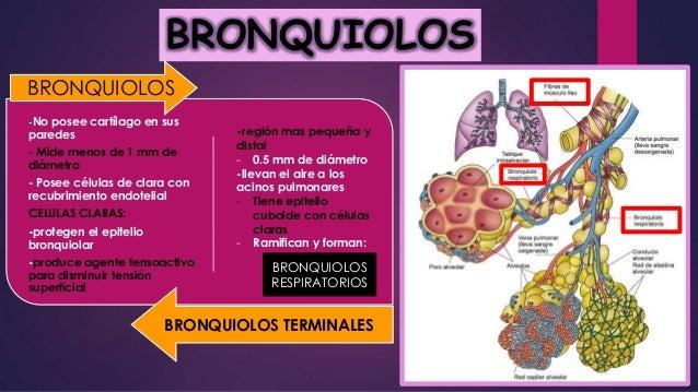 Bronquiolo
