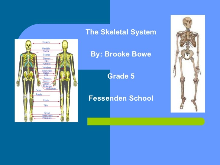 The Skeletal System By: Brooke Bowe Grade 5 Fessenden School Skeletal System By: Brooke Bowe Grade 5 Fessenden School