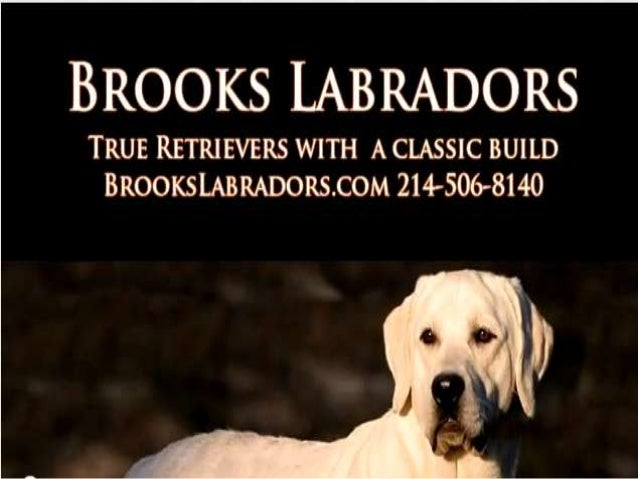 AboutBrooks Labradors LLC