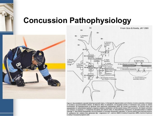 Donna K Broshek Quot Sports Concussions In Children And