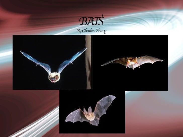 BATS By Charles Zhang