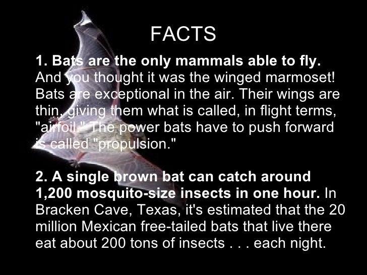 Brown Bats By Greg