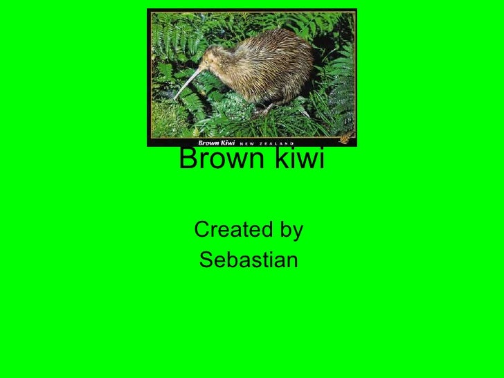 Brown kiwi Created by  Sebastian