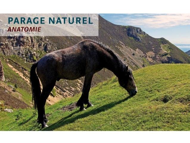 Caractéristiques du parage  naturel  • Le cheval marche activement sur sa sole  et passivement sur sa fourchette  • La par...