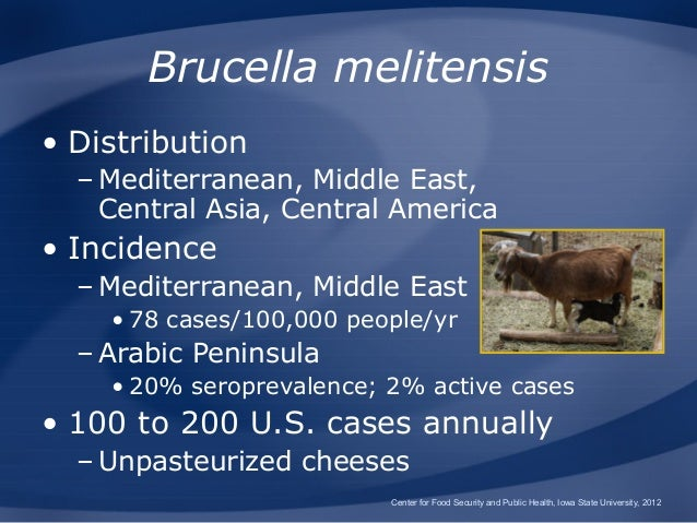 Brucellosis Brucellosis In Cattle