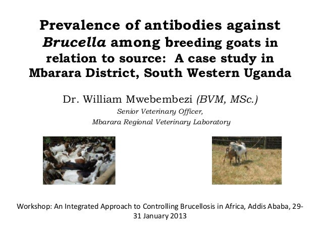 Prevalence of antibodies againstBrucella among breeding goats inrelation to source: A case study inMbarara District, South...