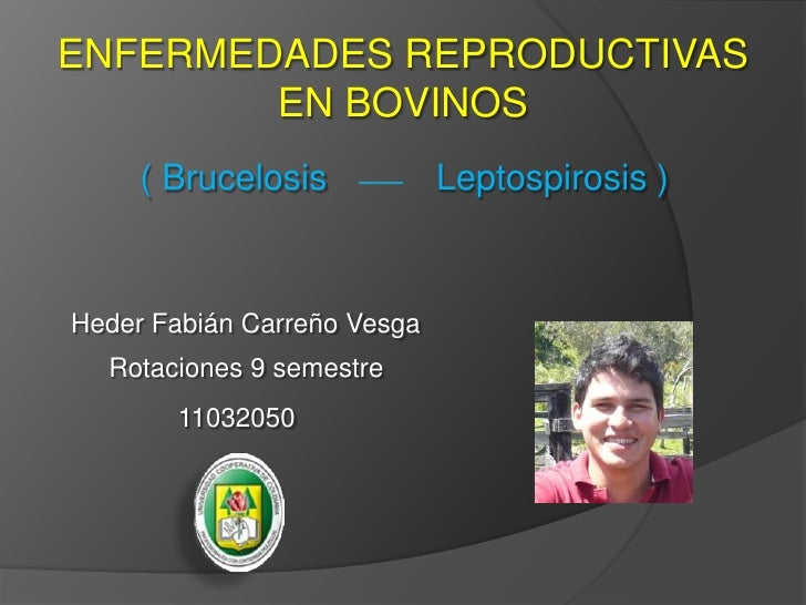 ENFERMEDADES REPRODUCTIVAS EN BOVINOS<br />( Brucelosis<br />Leptospirosis ) <br />Heder Fabián Carreño Vesga<br />Rotacio...