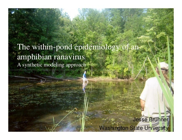 • The within-pond epidemiology of an amphibian ranavirus A synthetic modeling approach Jesse Brunner Washington State Univ...
