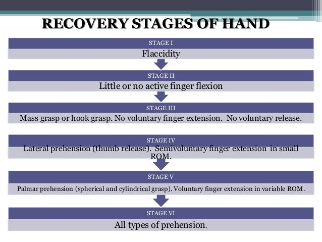 Brunnstrom's hand recovery stages