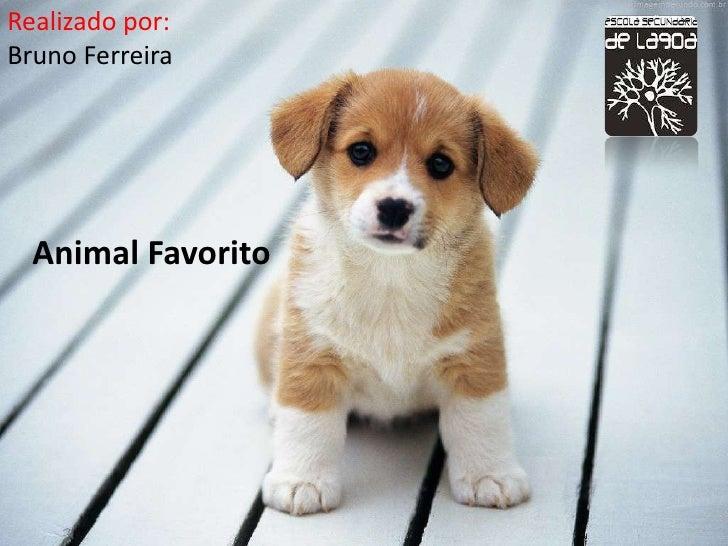Realizado por:Bruno Ferreira  Animal Favorito