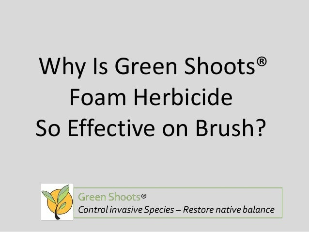 Why Is Green Shoots® Foam Herbicide So Effective on Brush?