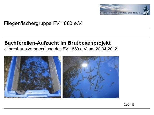 Fliegenfischergruppe FV 1880 e.V.Bachforellen-Aufzucht im BrutboxenprojektJahreshauptversammlung des FV 1880 e.V. am 20.04...