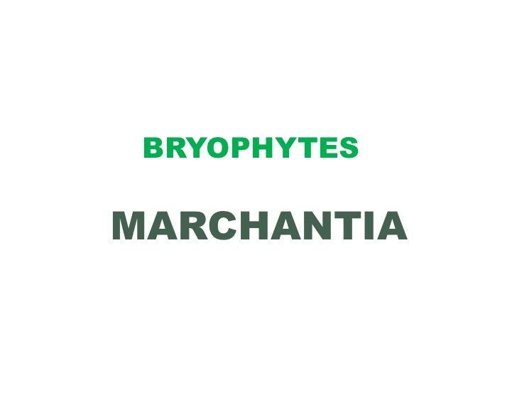 BRYOPHYTESMARCHANTIA