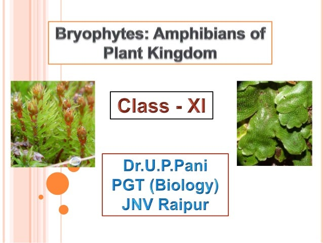  Bryophytes are among the simplest of the terrestrial plants.  Lack complex tissue system.  Most of them are 2–5 cm tal...