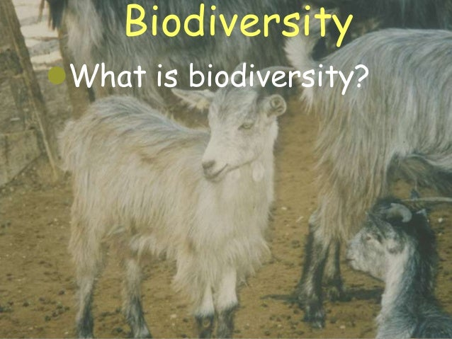 Bs2081 Heslop-Harrison Summary Lecture Ecology and Biodiversity - Agricultural Systems Slide 3