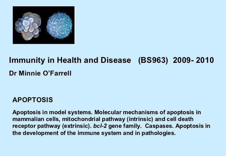 APOPTOSIS Immunity in Health and Disease  (BS963)  2009- 2010 Dr Minnie O'Farrell  Apoptosis in model systems. Molecular m...