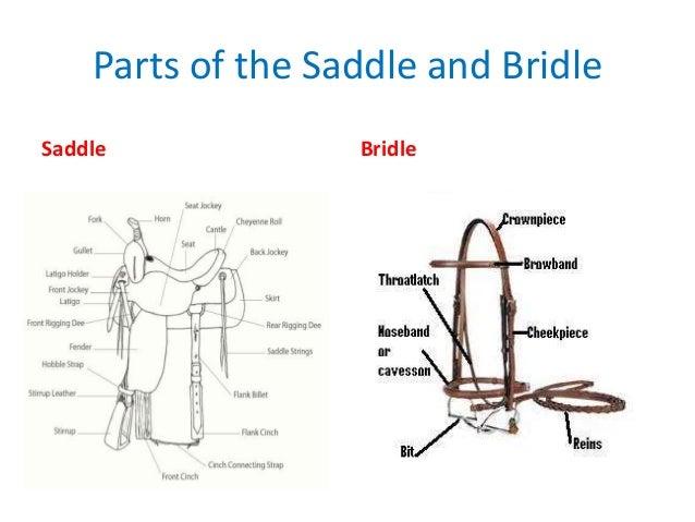 English saddle bridle parts diagram diy enthusiasts wiring diagrams bsa horsemanship mb rh slideshare net bridle replacement parts parts of the english bridle ccuart Choice Image