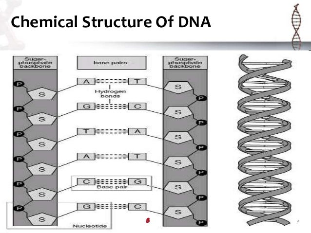 Dna Structure Pdf