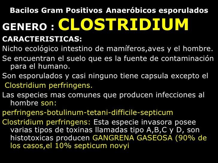 Bacilos Gram Positivos   Anaeróbicos esporulados <ul><li>GENERO :  CLOSTRIDIUM </li></ul><ul><li>CARACTERISTICAS: </li></u...