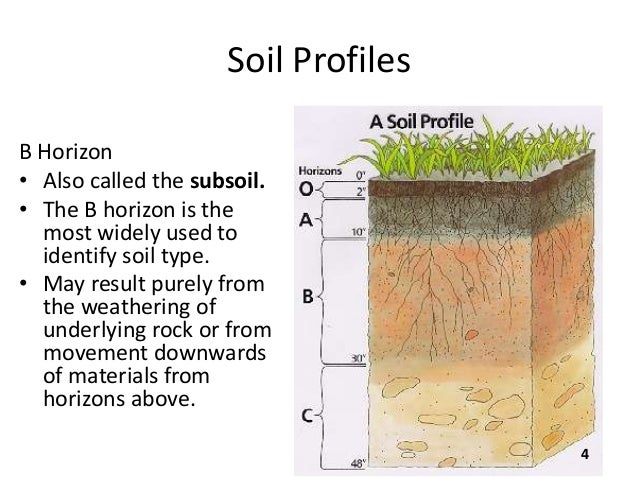B sc micro biotech biochem i es u 3 2 soil for What is found in soil