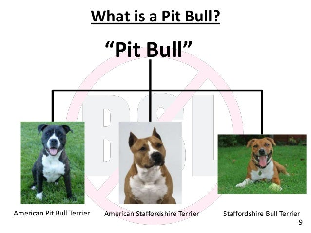 """breed specific legislation What is bsl """"breed-specific"""" legislation (bsl) is the blanket term for laws that either regulate or ban certain breeds completely in the hopes of reducing dog attacks."""