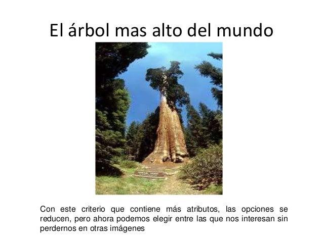 El árbol mas alto del mundo  Con este criterio que contiene más atributos, las opciones se  reducen, pero ahora podemos el...