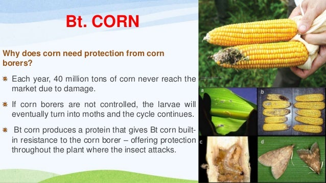 Bt. crops ppt