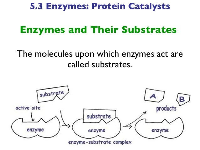 Biotechnology Chapter Five Lecture- Proteins (part b)