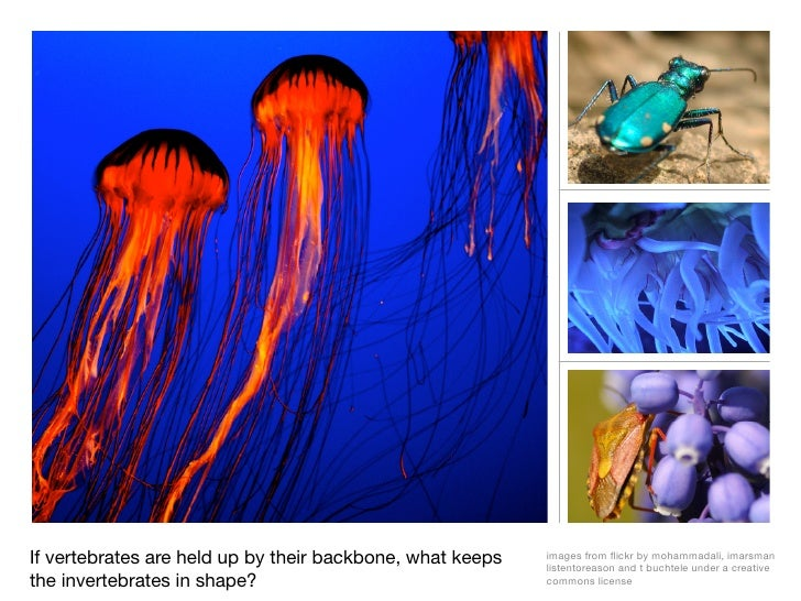 If vertebrates are held up by their backbone, what keeps   images from flickr by mohammadali, imarsman                     ...