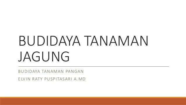 BUDIDAYA TANAMAN JAGUNG BUDIDAYA TANAMAN PANGAN ELVIN RATY PUSPITASARI A.MD