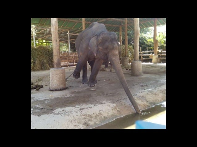 ELEPHANTS IN TOURISM: THE GOOD, THE BAD & THE UGLY Slide 3
