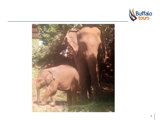 ELEPHANTS IN TOURISM: THE GOOD, THE BAD & THE UGLY
