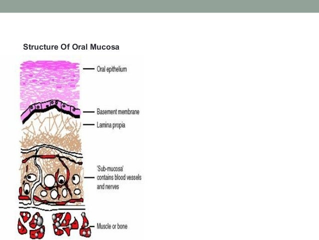 Buccal Bioadhesive Drug Delivery System G1ppt