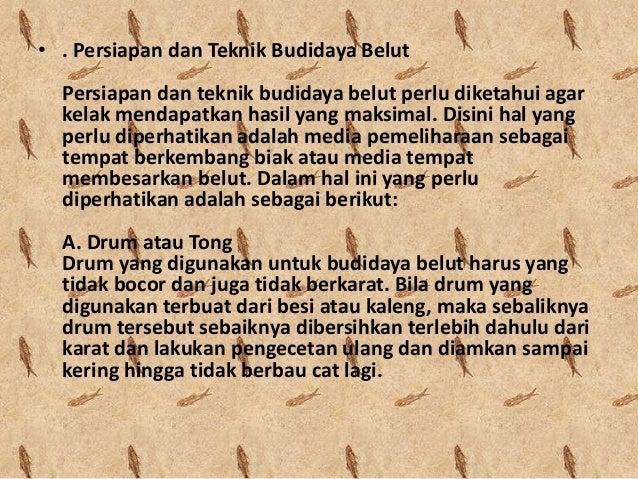 Budidaya Belut dalam Drum Slide 3