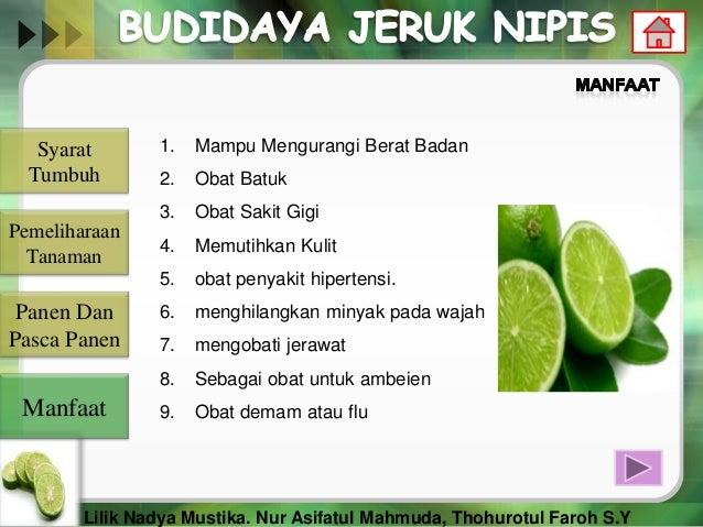 Cara Budidaya Jeruk Nipis