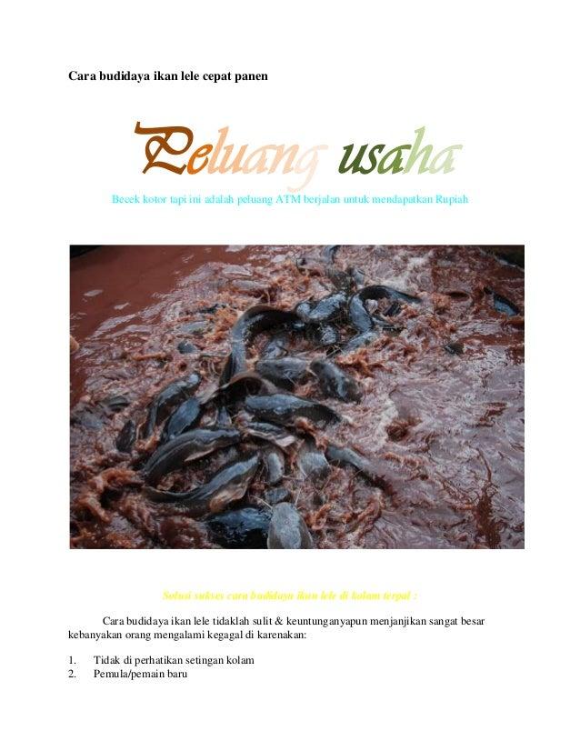 Budidaya Ikan Lele Kolam Terpal Ppt - Tentang Kolam ...