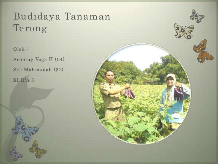 Budidaya TanamanTerongOleh :Arneray Vega H (04)Siti Mahmudah (31)XI IPA 3