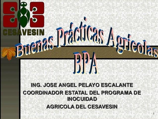 ING. JOSE ANGEL PELAYO ESCALANTECOORDINADOR ESTATAL DEL PROGRAMA DE              INOCUIDAD        AGRICOLA DEL CESAVESIN  ...